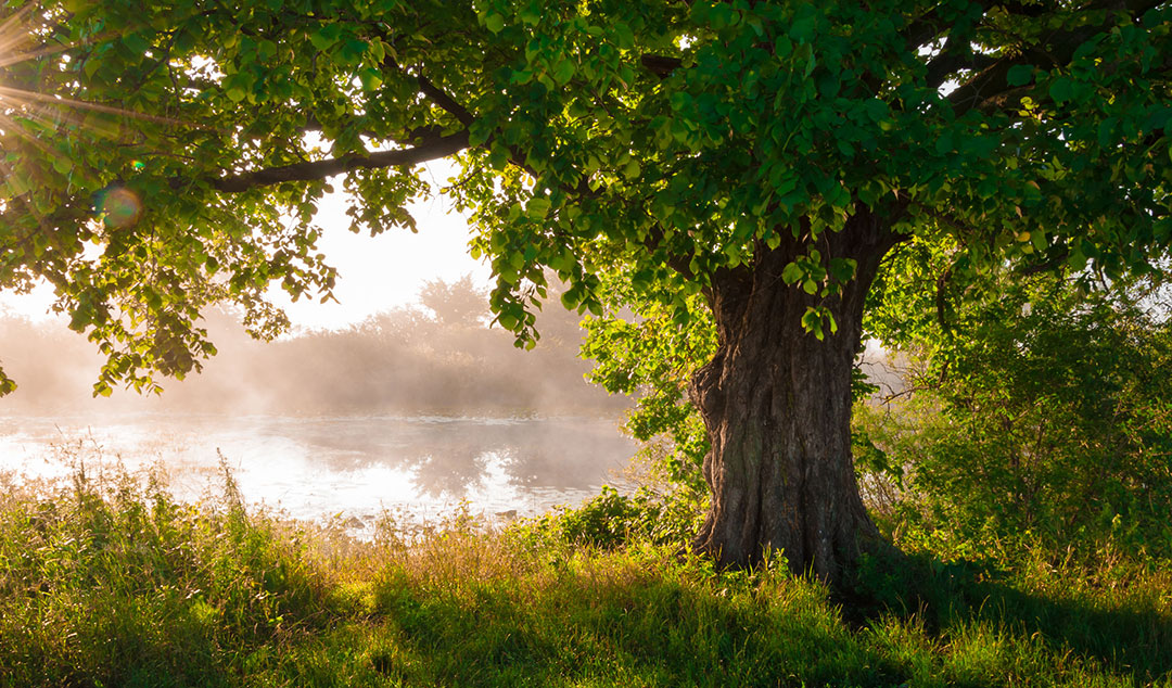 Tree Sunlight 30045541 M