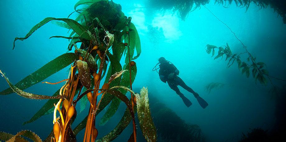 Feature Kelp Main 920x458