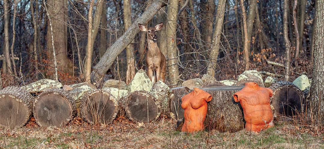 Good Vegan Neighbor Deer