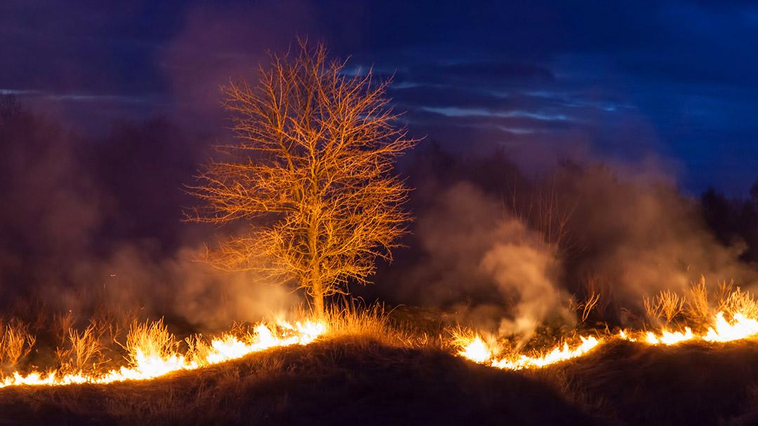 Wild Fire 38774401 M