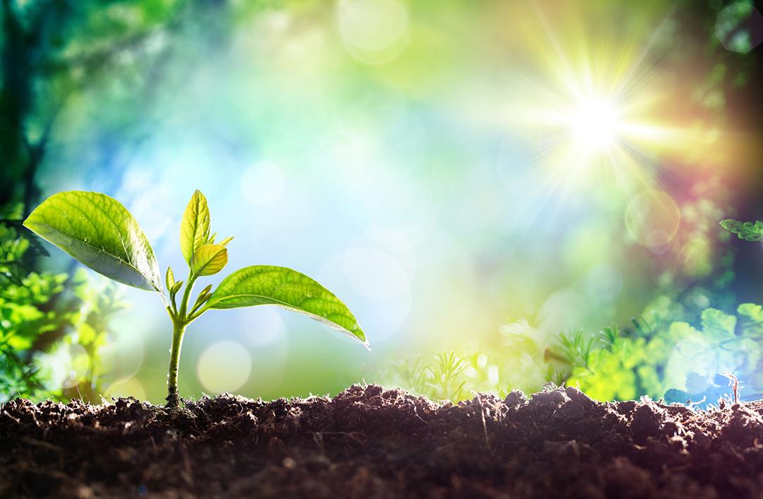 Seedling reaching for sunlight