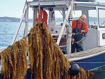 Pg 31 Ocean Farmer Bren Smith Cranking The Kelp Line Just Before Harvesting Color