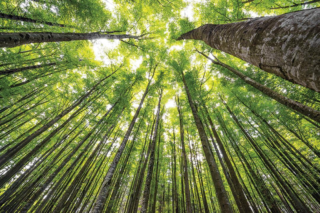Steppingin Tonature Trees