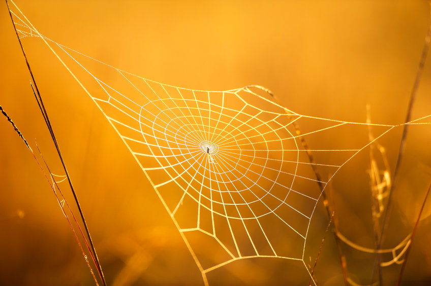 Magical Cobweb With Dew On Winter Morning.