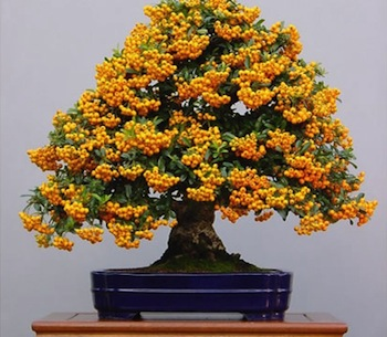 Grow Full Size Fruits In A Fraction Of The Area With Bonsai Trees Spirit Of Change Magazine Holistic New England