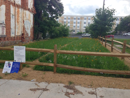 Two vacant lots where row homes once stood in Baltimore, Maryland. Each plot was cleared and seeded with native species. Even after one year on these poor soils, native plants established.